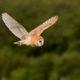 Photo by Shelly, Avon Wildlife Trust